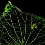 Multiple Award-Winning Nature Photographer & Conservationist Greg Basco Shares His Trade Secrets! (Part-II)