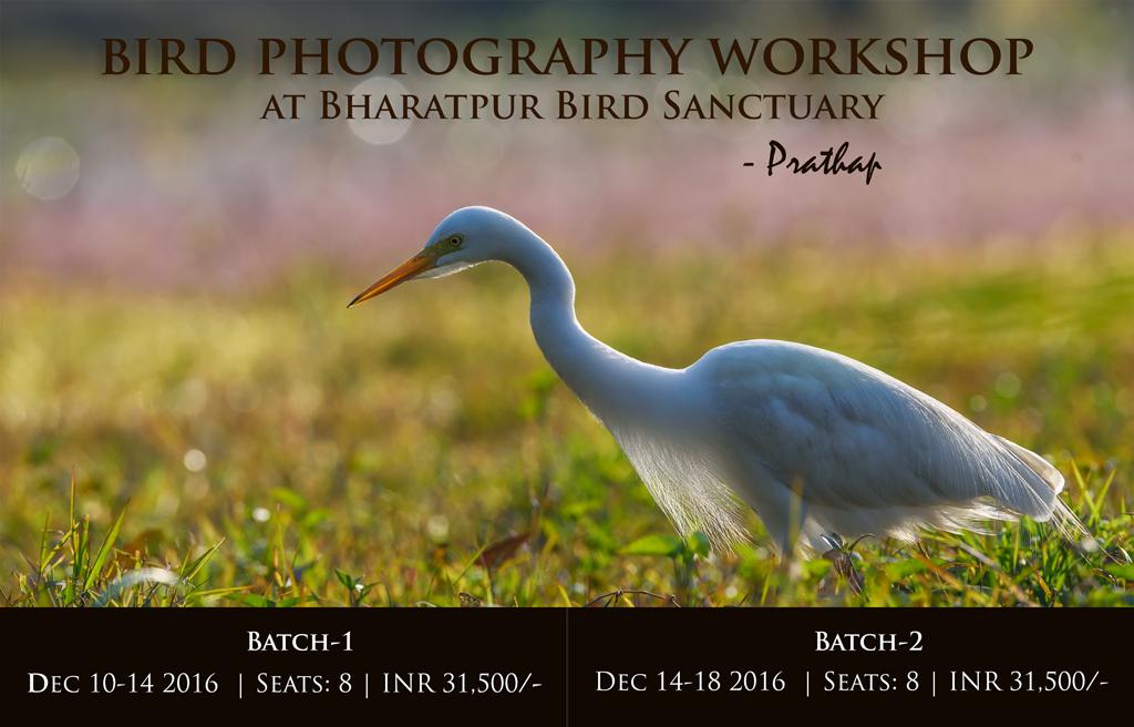 2016 Bird Photography Workshop in India. Best Bird Photography Workshop for Beginners and Amateurs. Photography Workshops in India by Prathap.