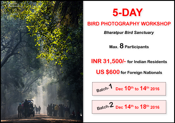 2016 Bird Photography Workshop in India. Best Bird Photography Workshop for Beginners and Amateurs. Photography Workshops in India by Prathap.