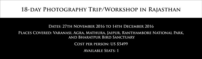 Bird Photography Workshops in India. Online and Offline Bird Photography Workshops. Post-Processing Workshops. Photography Workshops by Prathap.