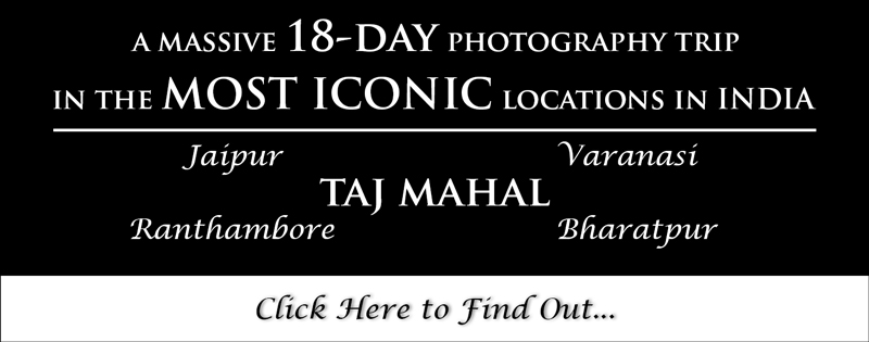Banner-18-Day-Photography-Trip-Rajasthan-Bharatpur-Bird-Photography-Workshop