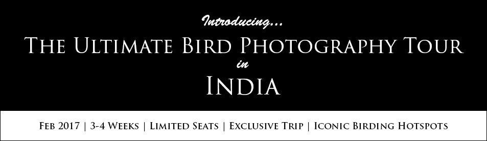 Bird Photography Workshop in Birding Hotspots in India. Bharatpur Bird Sanctuary or Keoladeo National Park - A Complete Guide to Travellers and Photographers. Best Time to Visit. Best Place to Stay. Park Entry Fees. Bird Photography at Bharatpur Bird Sanctuary or Keloadeo National Park. Rajasthan Birding Hotspots.