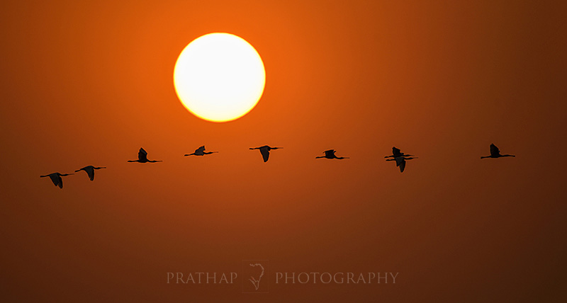 Bharatpur Bird Sanctuary or Keoladeo National Park - A Complete Guide to Travellers and Photographers. Best Time to Visit. Best Place to Stay. Park Entry Fees. Bird Photography at Bharatpur Bird Sanctuary or Keloadeo National Park. Rajasthan Birding Hotspots.