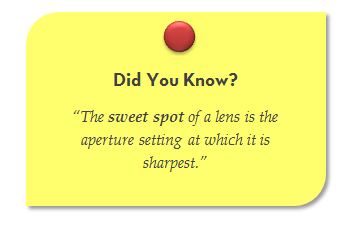 How to test the Sharpness of a lens. Sharpness test of a lens. Sweet spot of a lens. Nature Photography Tutorials by Prathap.