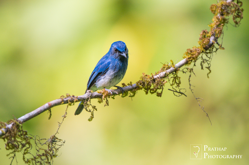 Bird Mammal Wildlife and Nature Photography Tips and Tutorials by Prathap. Best way to learn photography.