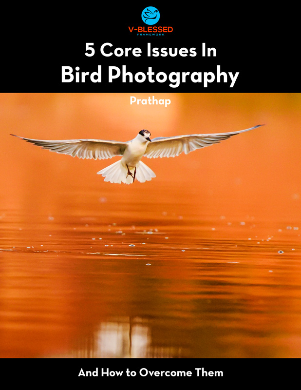 VBLESSED V-BLESSED framework. A powerful learning platform for novice and amateur bird photographers. Bird Photography by Prathap.