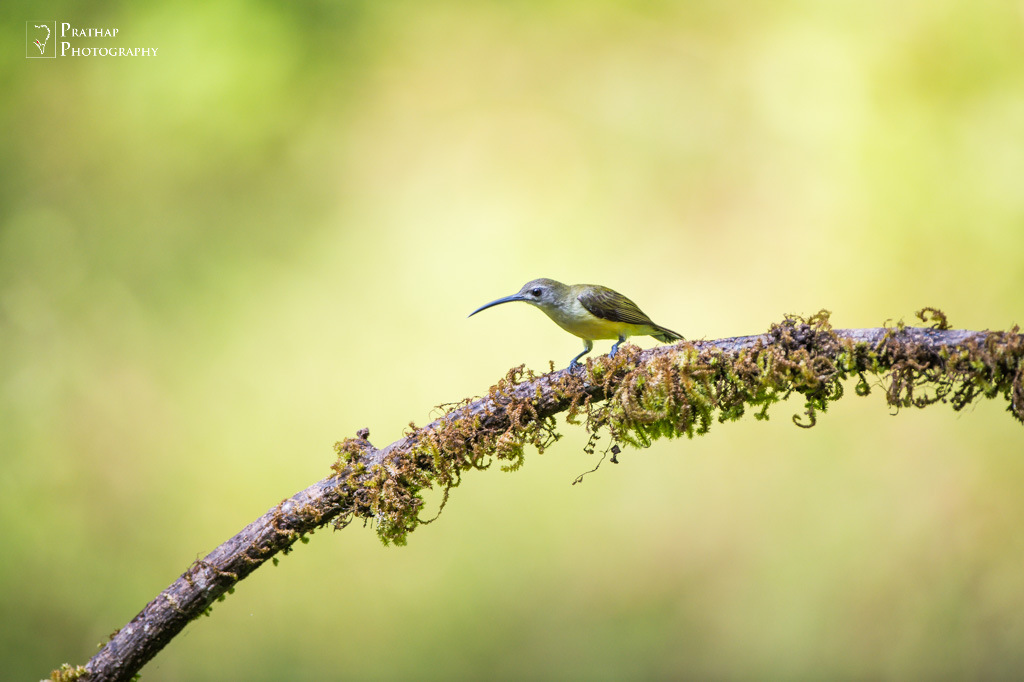 best professional bird photography tips and techniques and tutorials for novice and amateur bird photographers. Bird photography by Prathap