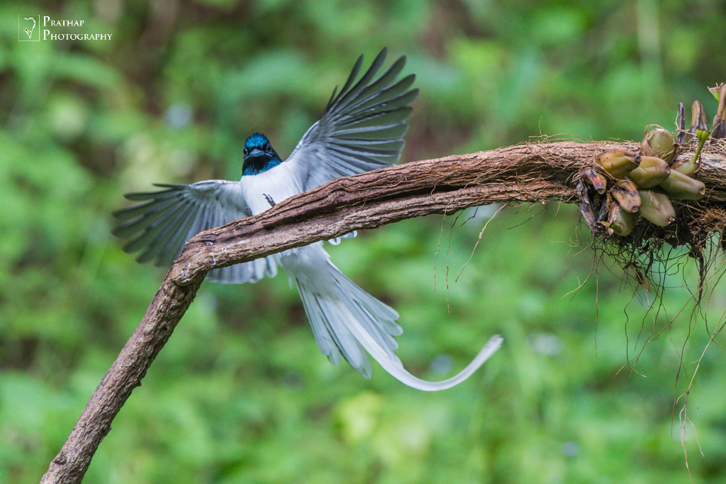 Amateur bird photographs