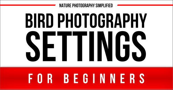 Simple Bird Photography Settings For Beginners