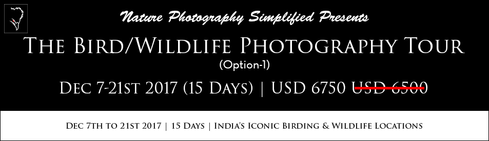 Bird Photography Workshop and Wildlife Photography Workshop in India. Bharatpur, Ranthambore, Sattal Photography Workshops by Professional Photographer Prathap. Nature Photography Simplified.