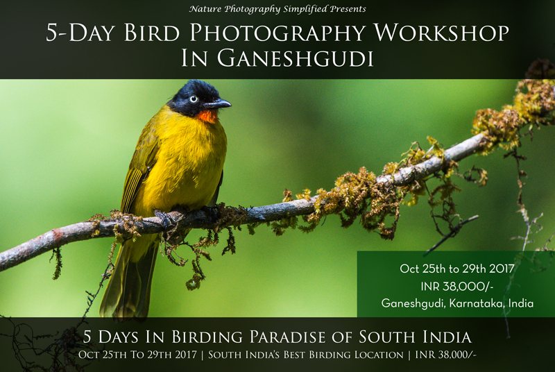 Bird Photography Workshop in Ganeshgudi, Karnataka, South India. Best Birding Hotspot in South India.