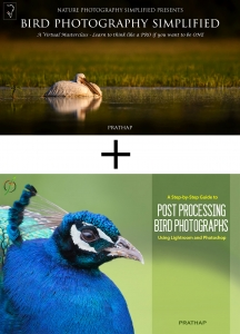 best bird photography ebooks or books. Bird photography tips and techniques. Post-processing guide to adobe photoshop and lightroom.