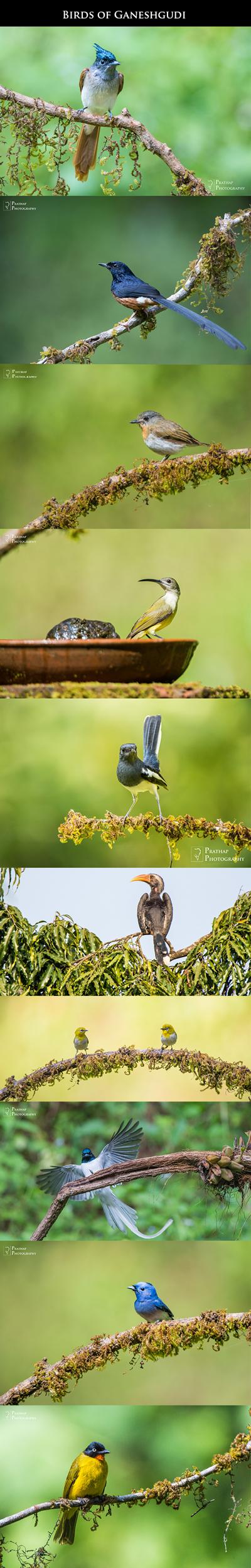 Bird Photography Workshop in Ganeshgudi, Karnataka, South India. Best Birding Hotspot in South India.