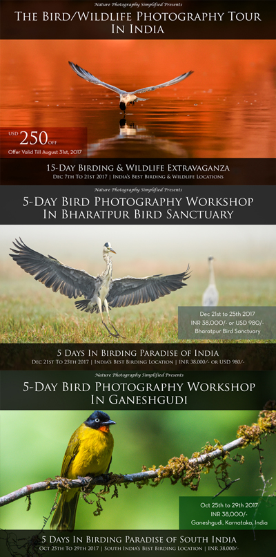 Bird Photography Workshop in Bharatpur, Ganeshgudi, India.