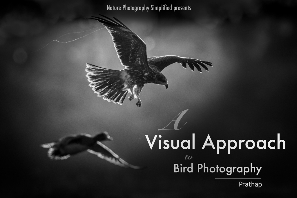 Bird photography eBook A visual approach to bird photography. Bird photography tips and techniques from the field. Professional Photography by Prathap.