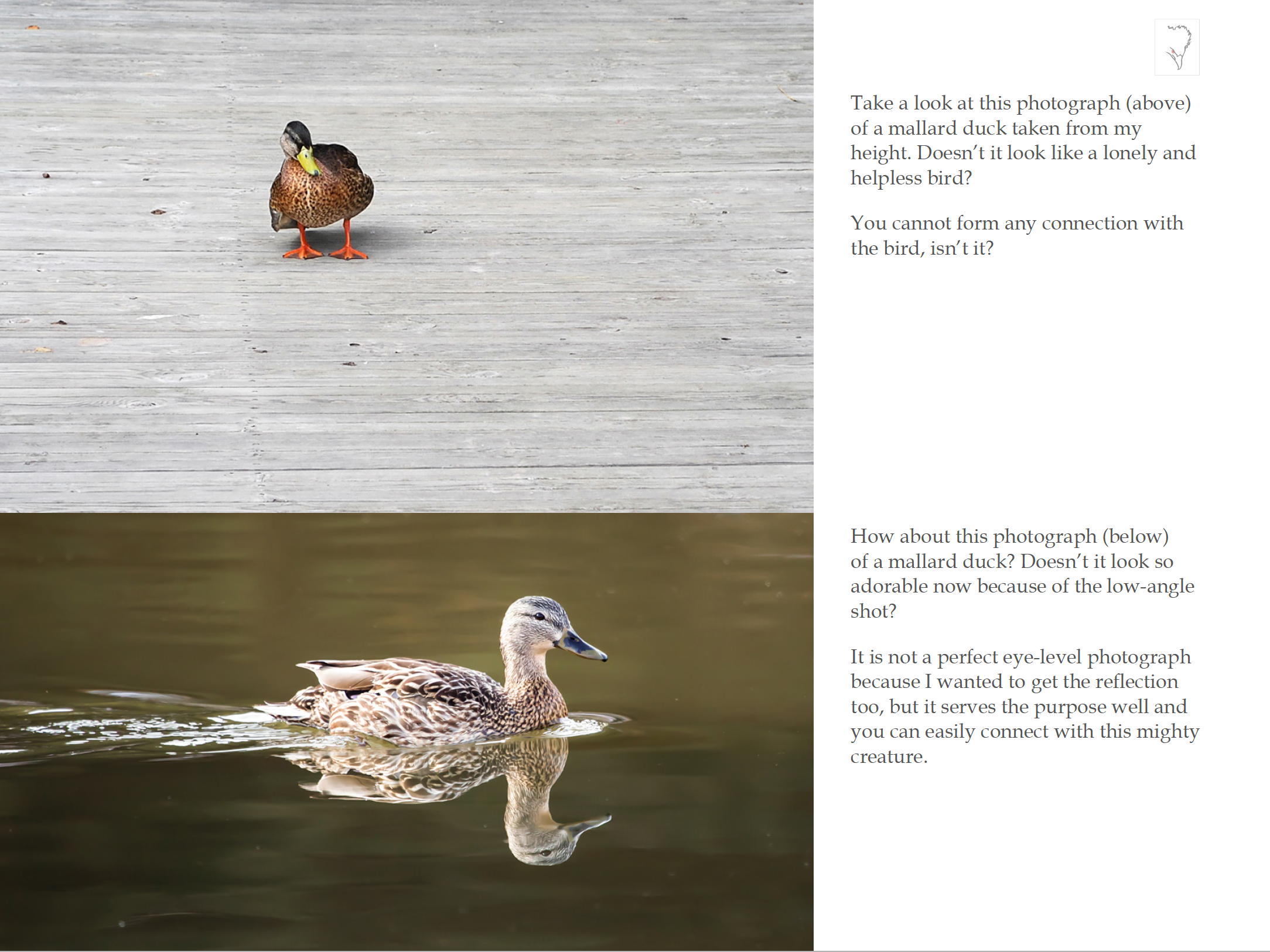 Free eBook on Bird Photography! A 66-page eBook that's packed with some great field tips and techniques.