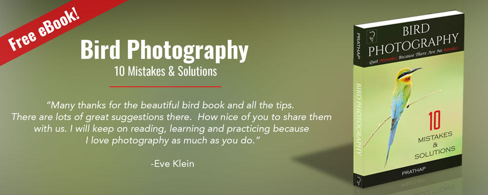 Free Bird Photography eBook – 10 Mistakes & Solutions