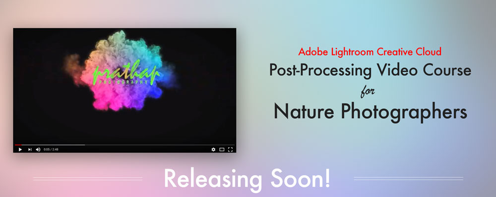 Video Course on Post-Processing for Nature Wildlife Bird and Landscape Photographers on Adobe Lightroom Creative Cloud by Prathap D K