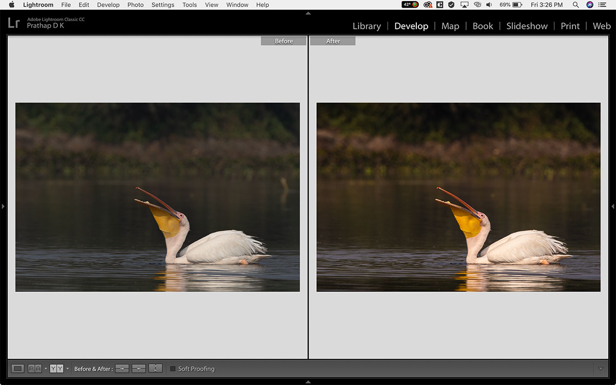 5 Before-After Bird Photographs (Plus Post-Processing Tips