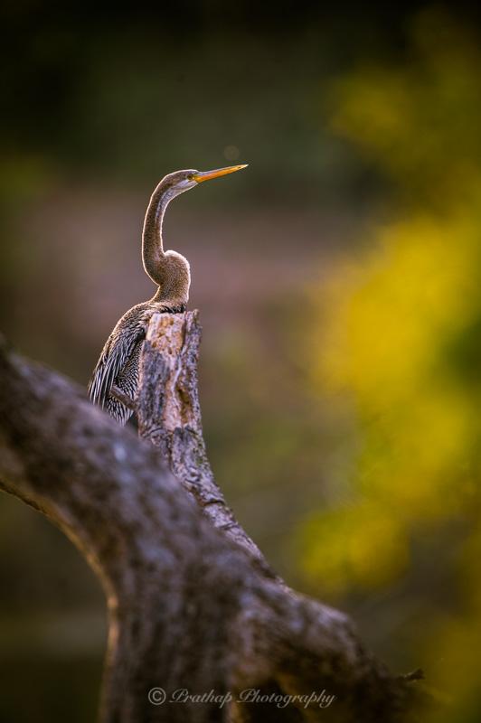 Adobe Lightroom Bird Photography Presets for Bird Photographers by Prathap D K