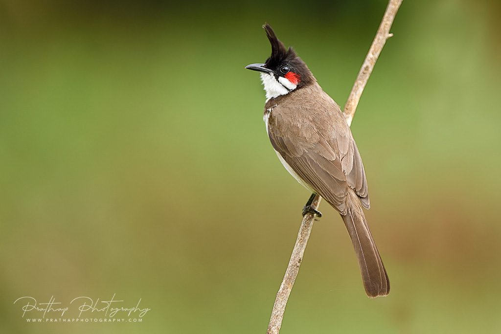 Birds Photography Tips and Tutorials for Beginners by Prathap D K