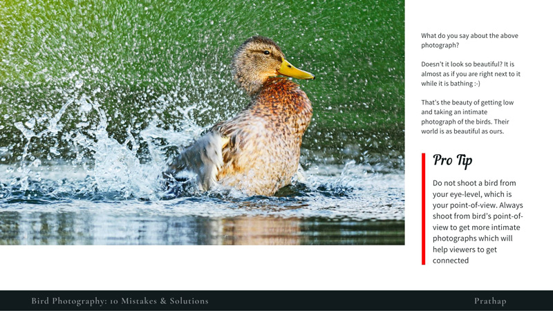 Sample Page from the FREE eBook -- Bird Photography: 10 Mistakes & Solutions. A FREE eBook for Novice & Amateur Bird Photographers with loads of practical bird photography tips!