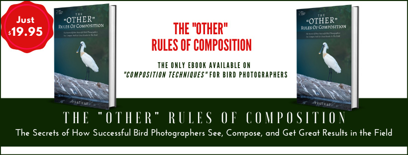Rules of Composition for Bird Photographers. Composition Techniques for bird photographers.
