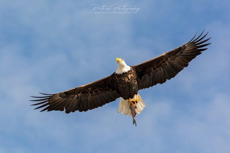 "9 Amazing ""Bird In Flight"" (BIF) Shots That You Should Try Today!"